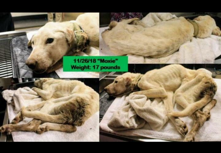 Moxie - A Miracle Dog 4