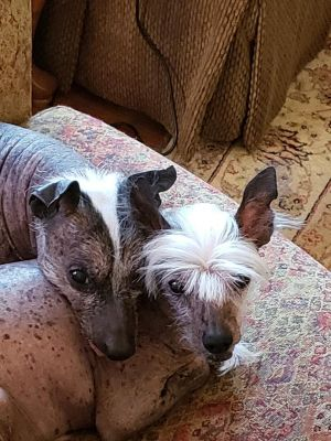 Dogs For Adoption Near New Hampshire Nh Petfinder