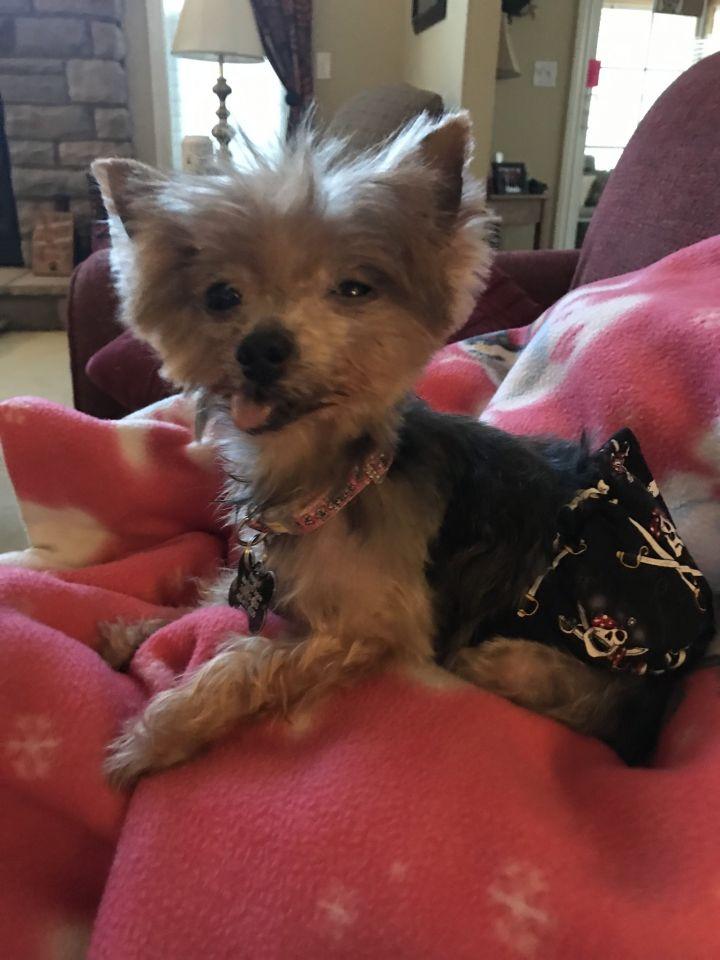 Dog For Adoption Tonka Adoption Pending Near Mentor Oh Petfinder