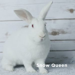 Shes an elegant rabbit and reminds us of a tiny Lipizzaner horse with her long