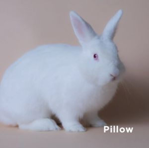 She got her name from being a round and exceptionally soft bunny Originally from the South Bay she