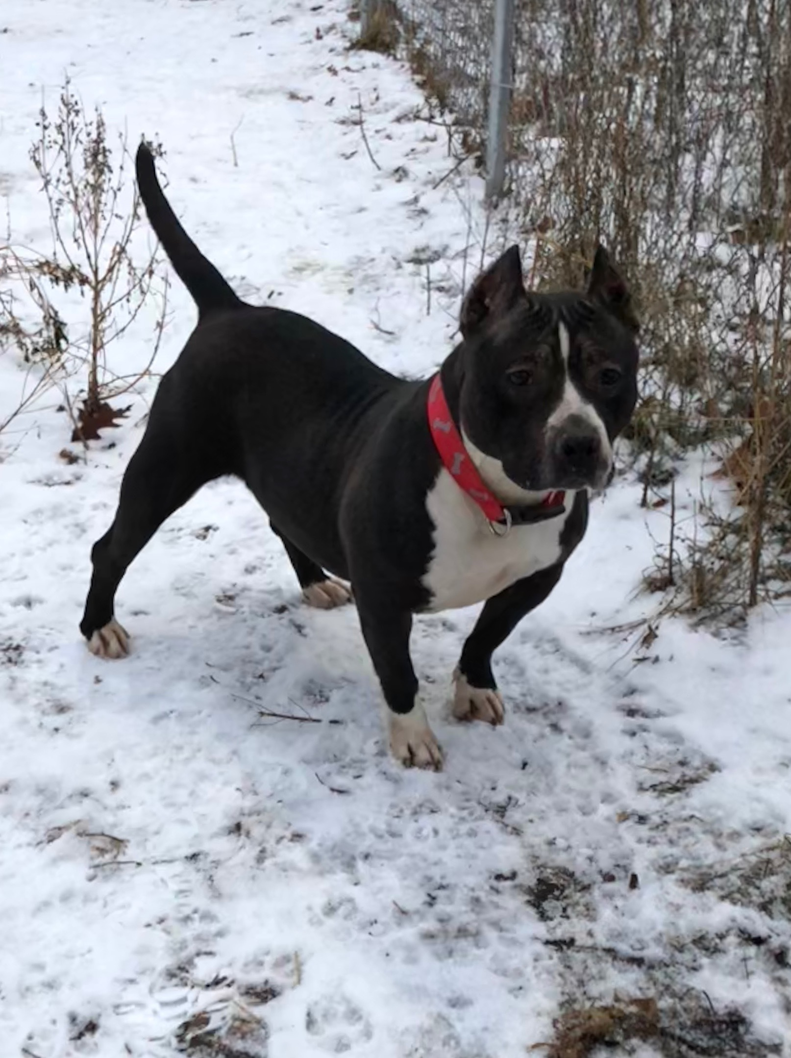Dog For Adoption Zelda Near Big Rapids Mi Petfinder