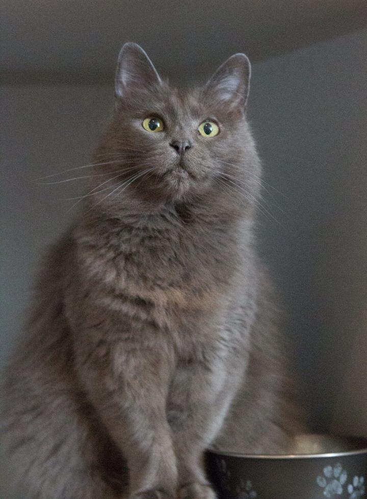 Lady Grey 4