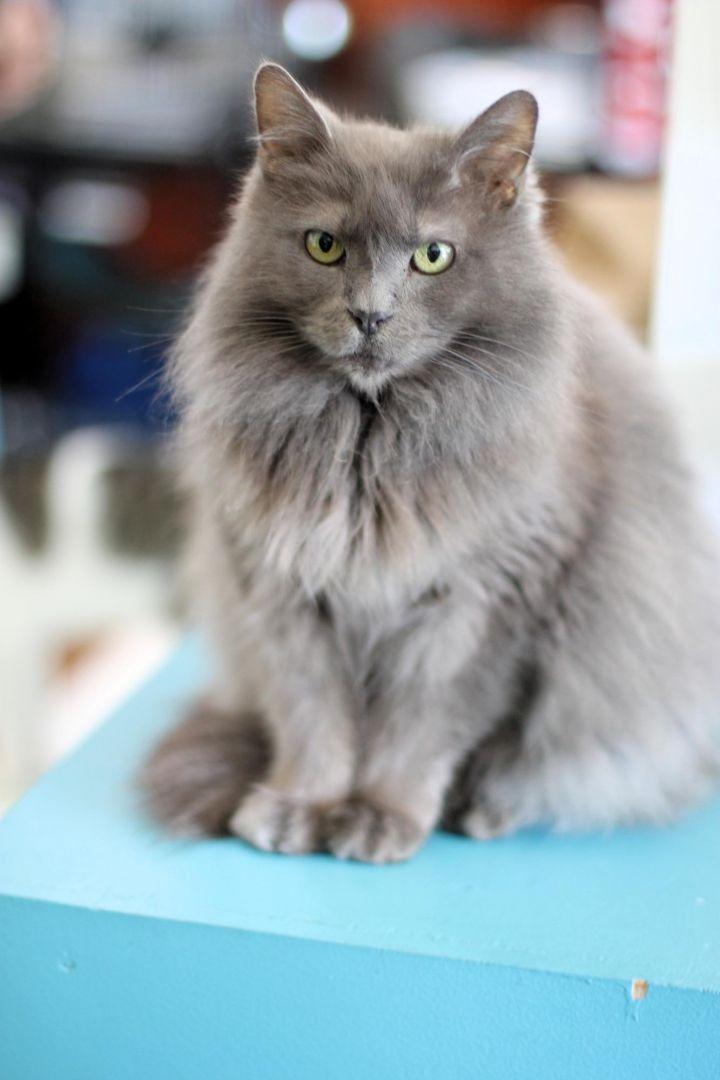 Lady Grey 1