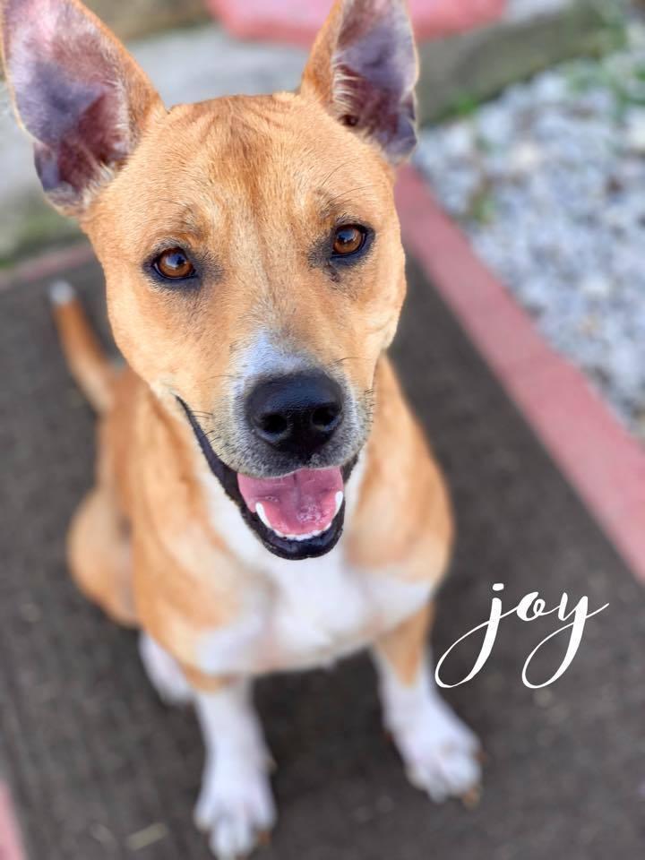 Joy 5