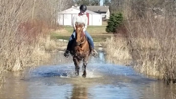 Seven, an adopted Quarterhorse in Elkhart Lake, WI