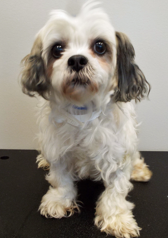 Dogs For Adoption Petfinder