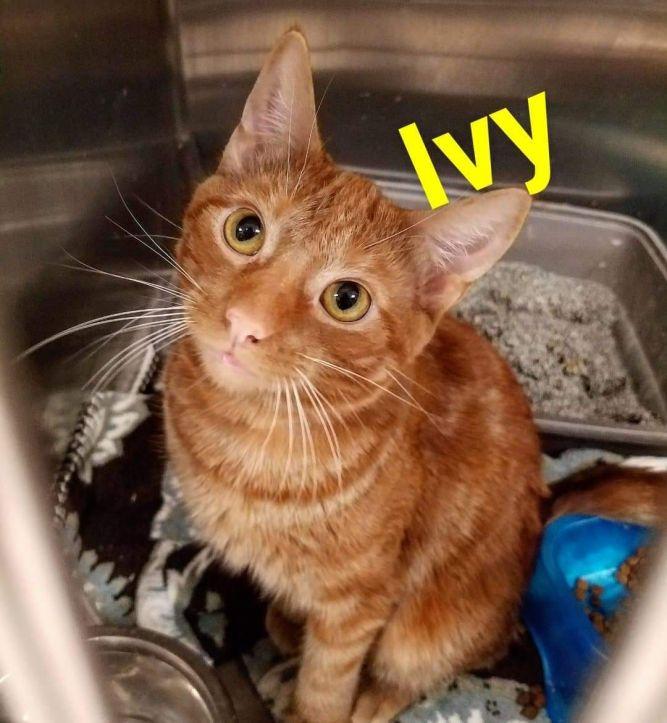 Ivy *Pet Supplies Plus*