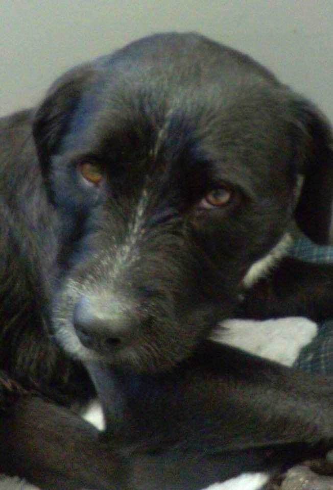 Dogs For Adoption Near Washington Dc Dc Petfinder