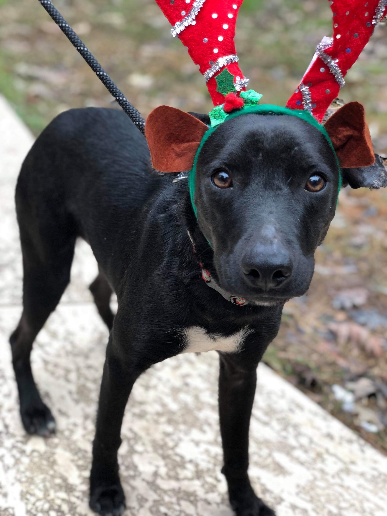 Dogs For Adoption Near Massachusetts Ma Petfinder