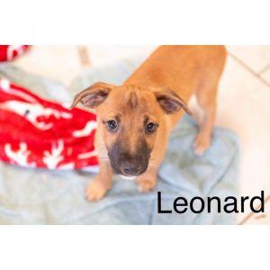 . Leonard and Sheldon .