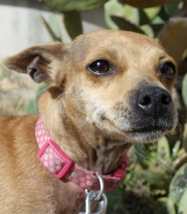 Dogs For Adoption Petfinder