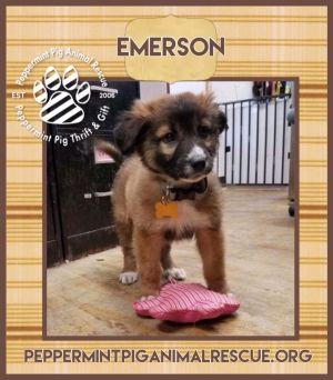Emerson ADOPTION PENDING