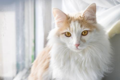 c06d3255d1dde9 Cat for Adoption – Marshall