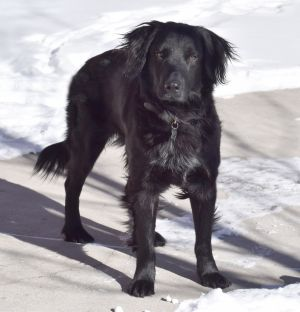 Dogs For Adoption Near San Antonio Tx Petfinder