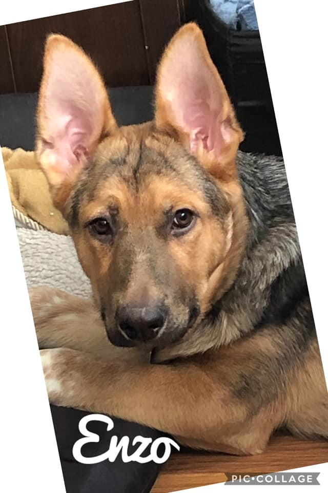 Dogs For Adoption Near Winnipeg Mb Petfinder