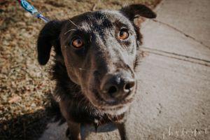 Luna - Adoption Pending