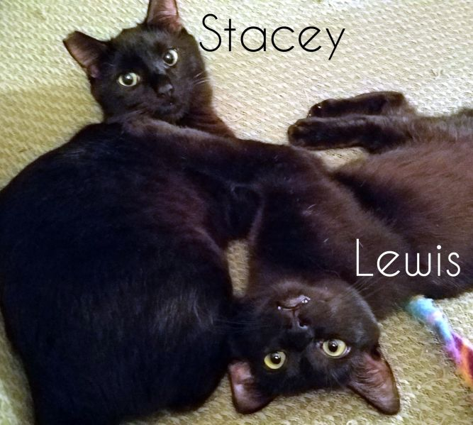Lewis & Stacey