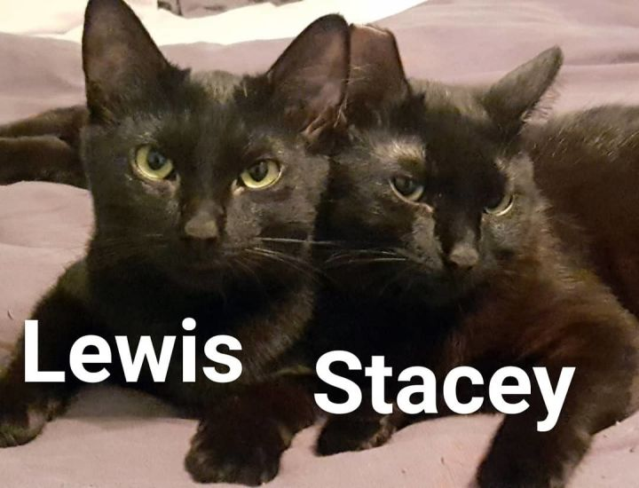 Lewis & Stacey 4