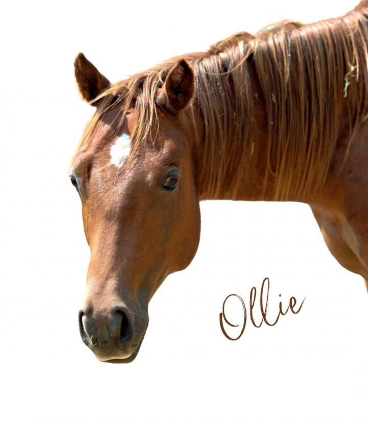 Ollie 1