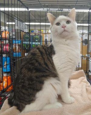 Toby - Meet Me at Pet Valu Oakton
