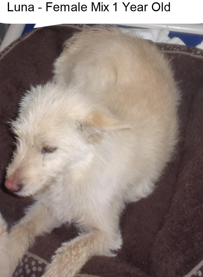 Dog For Adoption Luna And 5 Puppies A Labrador Retriever Sheep