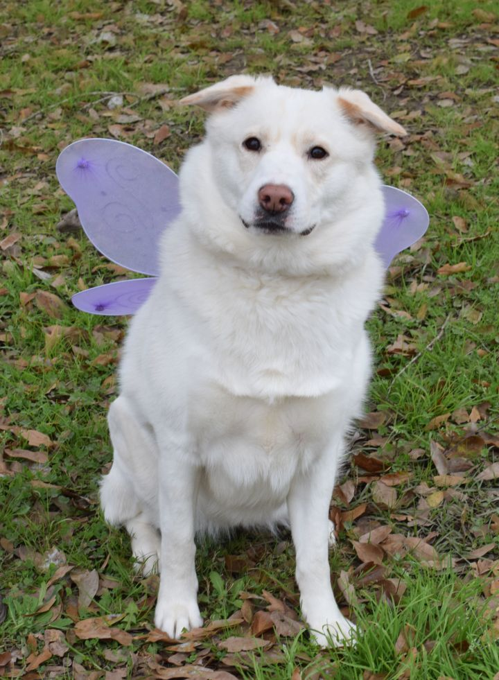 Lexie, an adoptable Husky & Carolina Dog Mix in Carencro, LA