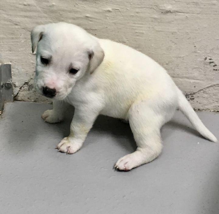 Snow-Noel's Pup 4