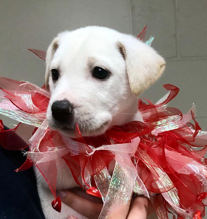 Snow-Noel's Pup 1