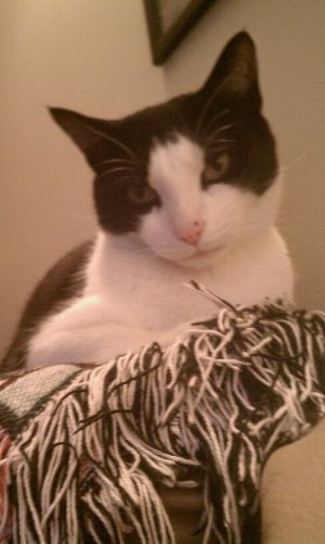 Meet Gizmo Hes a 10 year old male neutered and vaccinated Hes very sweet and mellow Hes looki