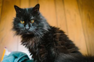 We rescued Jivas after he was dumped at the shelter Despite being a loyal companion for 15 years h