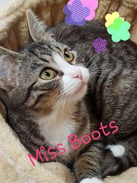 Miss Boots - Adoption Fee Sponsored 2