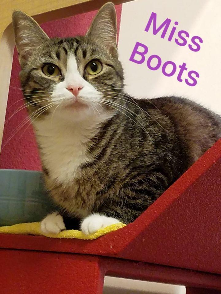 Miss Boots - Adoption Fee Sponsored 5