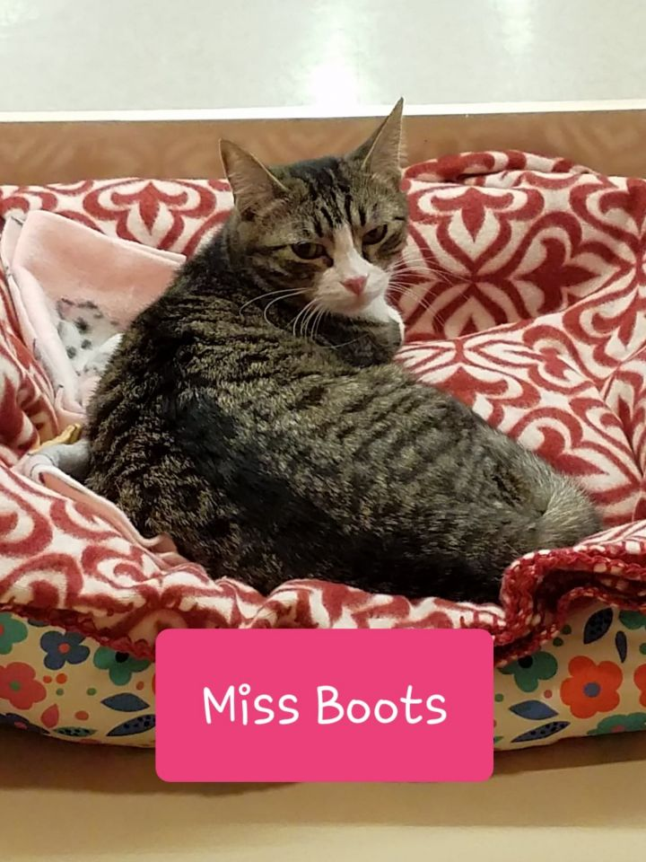 Miss Boots - Adoption Fee Sponsored 6