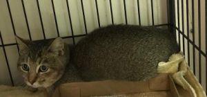 Smokey (Barn Cat)