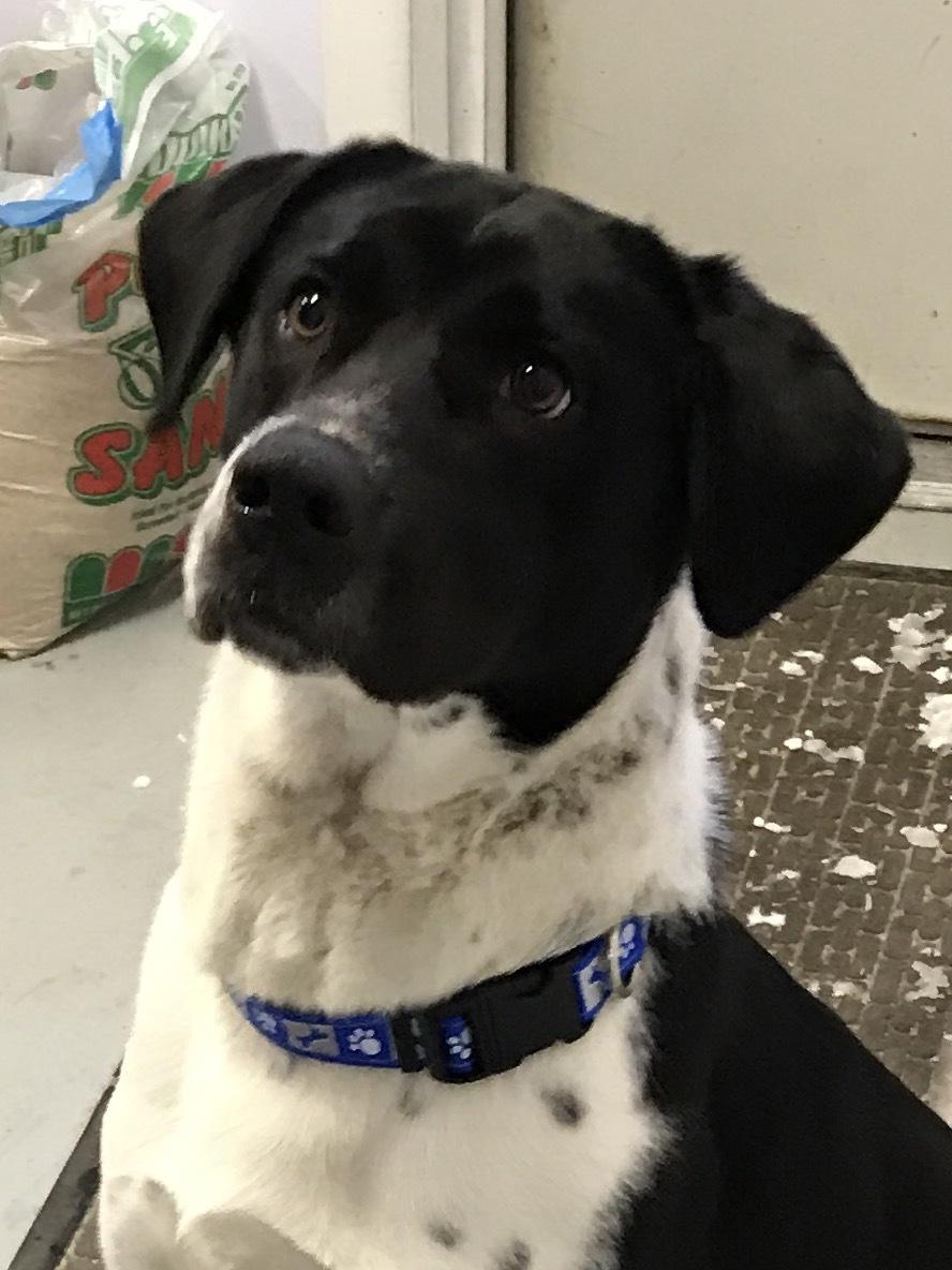 Dog For Adoption Chico Near Big Rapids Mi Petfinder