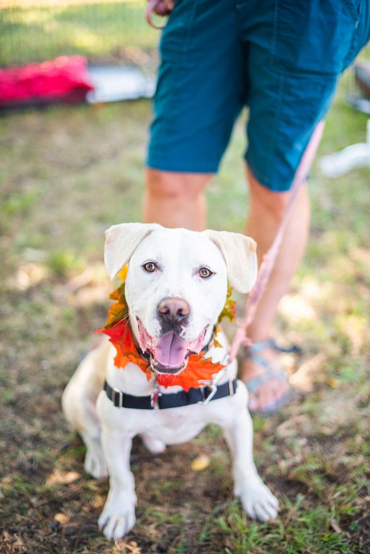 Ghost (aka Dexter), an adopted Labrador Retriever Mix in Clayton, NC