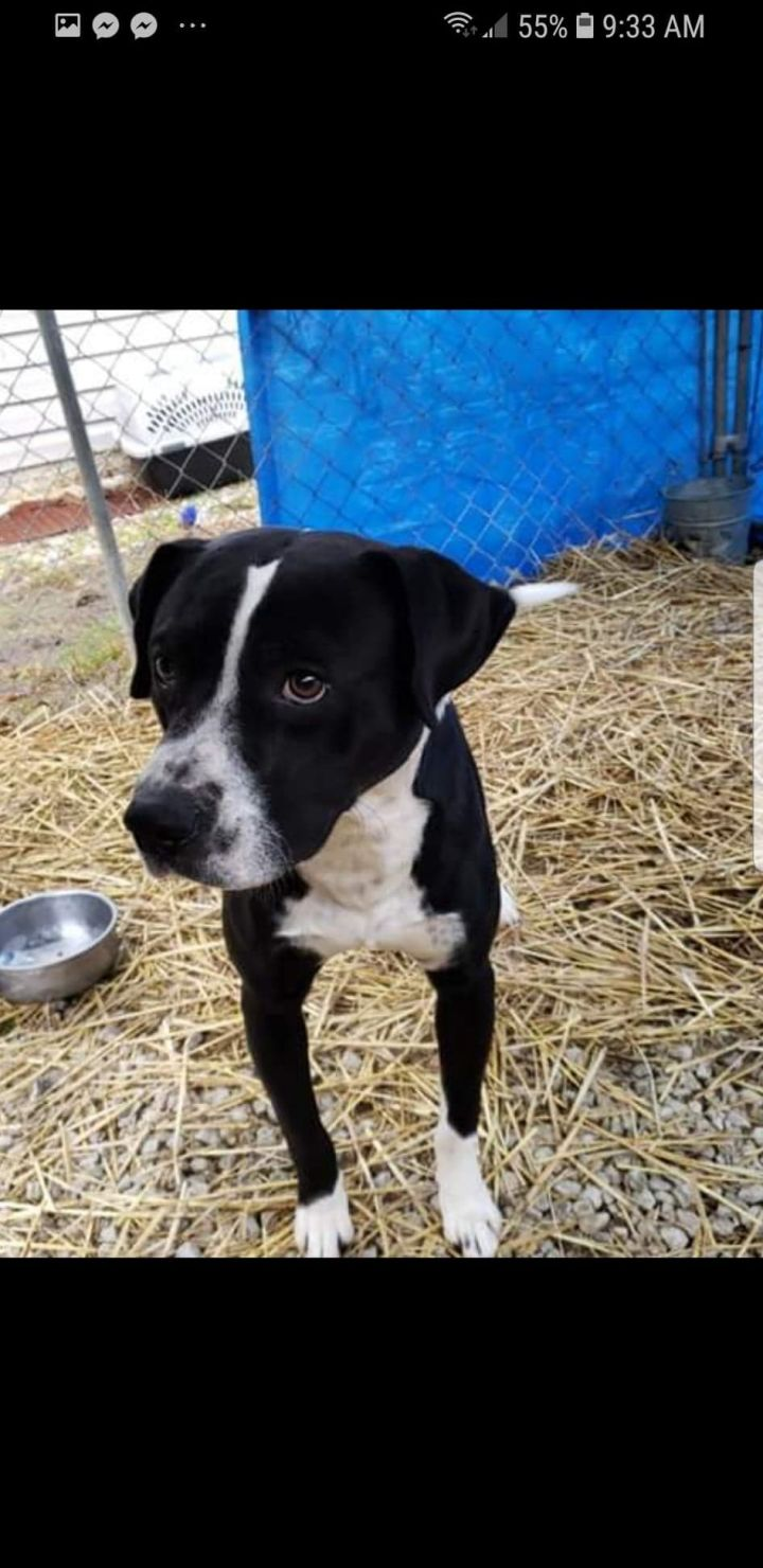 Martin, an adopted Boxer & Hound Mix in Inez, KY