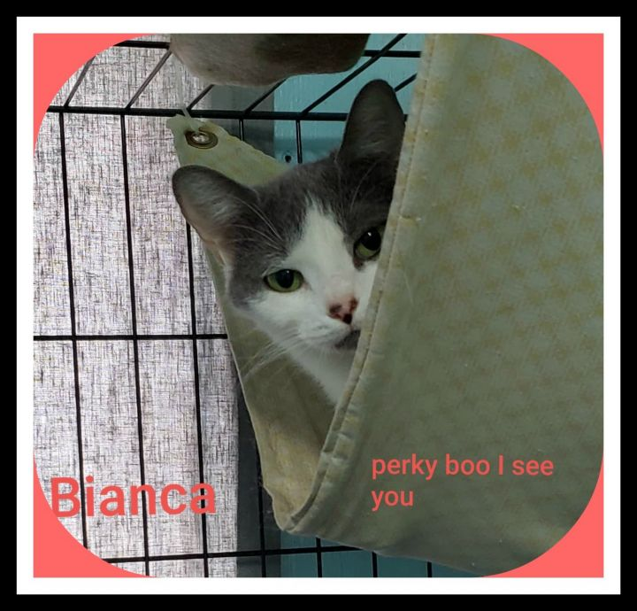 Bianca 1