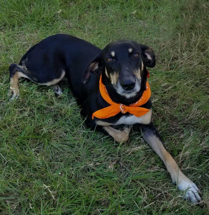 Noelle, an adoptable Hound Mix in Cypress, TX