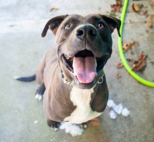 An interview with Mocha Fast Facts Birthdate 2102016 Breed One of a kind Weight 75 lbs Its Fr