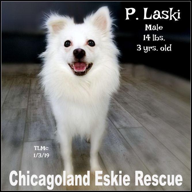 Pete Laski