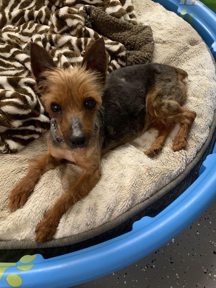 Dog For Adoption Faith Near Richmond Va Petfinder