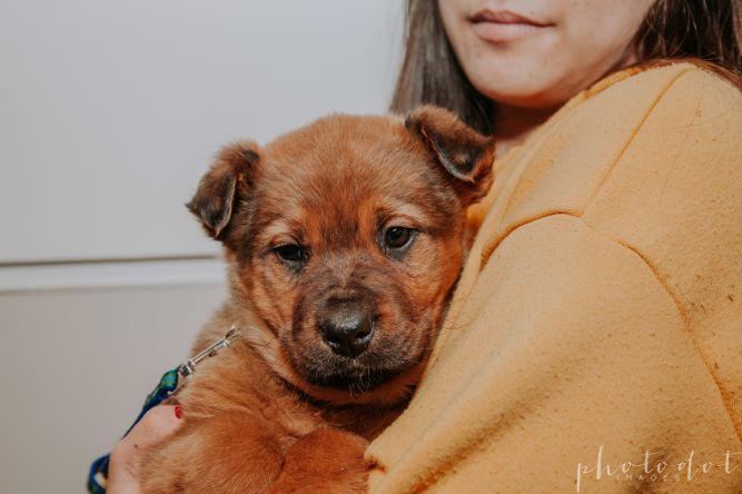 Aspen - Adoption Pending
