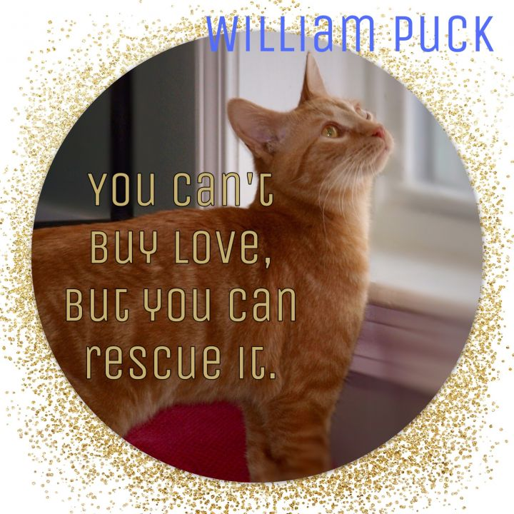 WILLIAM PUCK 1