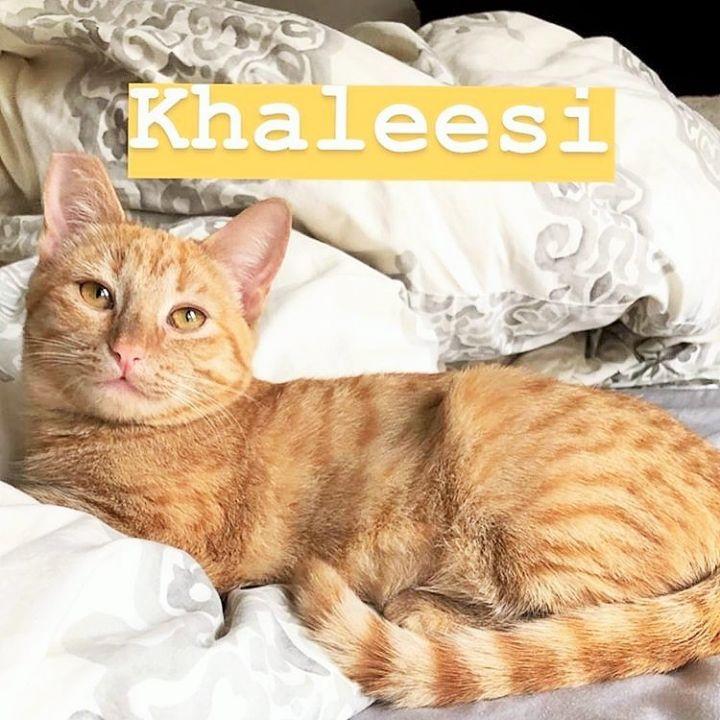 Khalessi 2