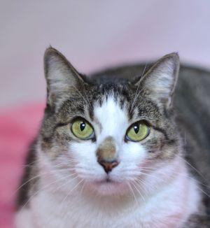 Katrina Riley Tabby Cat