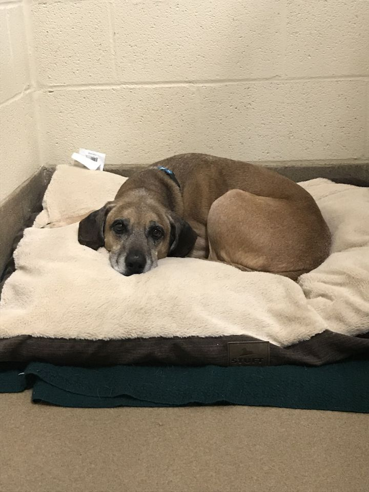 Dog For Adoption Marley A Hound Mix In Winchester Va Petfinder