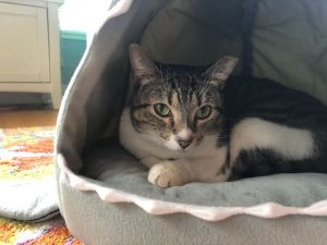 Arya Stark is a feisty 2 year old tabby girl who like her namesake has had a rough go of
