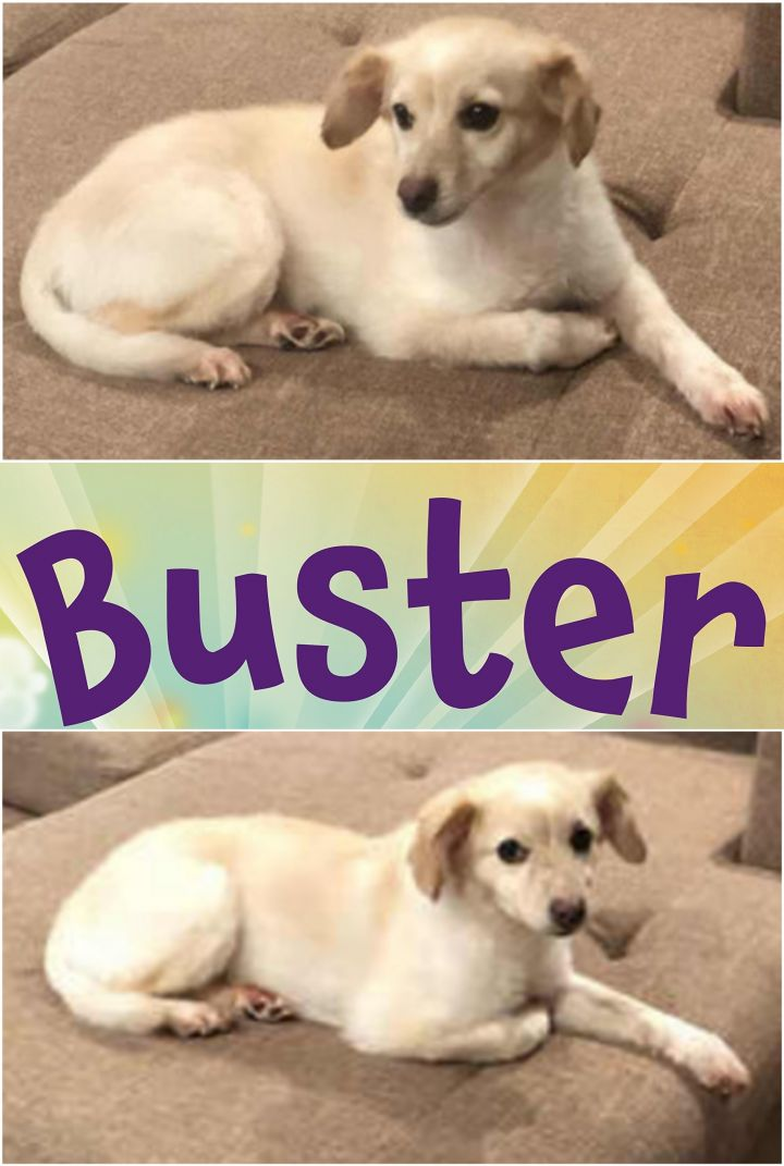 BUSTER-LHB 3